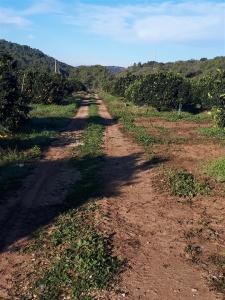 Ciaowalk Natura - Sentiero delle Arance