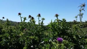 Ciaowalk Natura - Sentiero dell'Erbe Selvatiche - RG