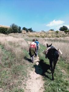 A Passo d'Asino sulla Dorsale dei Nebrodi - Trekking Someggiato